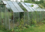 Greenhouse  Triffids Before