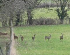 Deer - Feb 15