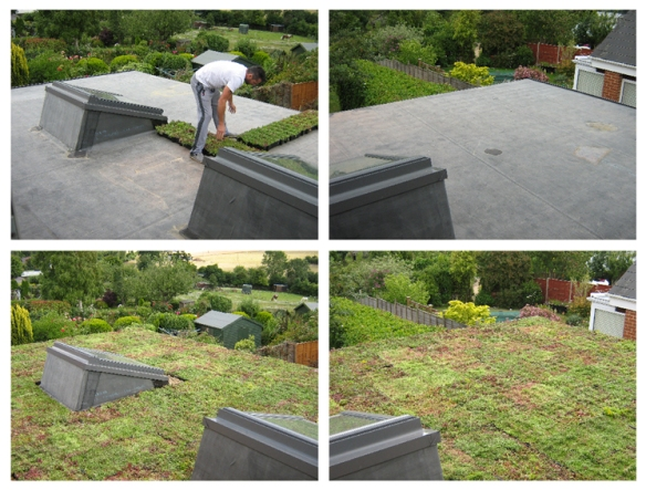 Green Roof - before and after