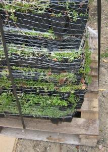 Sedum roof tray stack