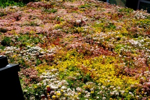 Green Roof - 3 July 2016