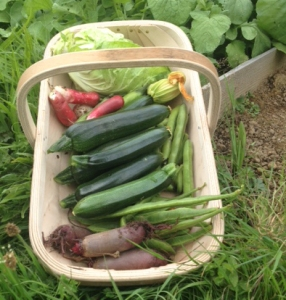 Trug of Veg - July2016