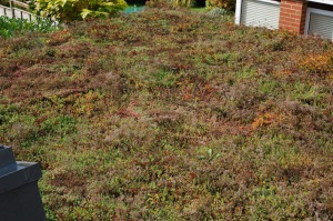 green-roof-8-october-2016
